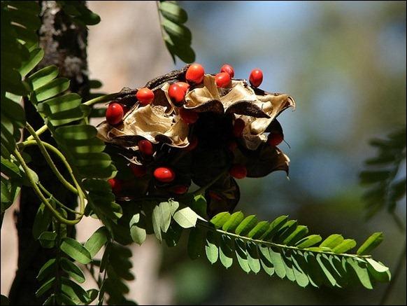 Top 10 most poisonous plants 10