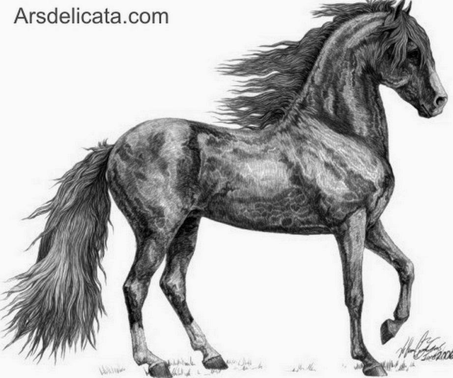 caballos-dibujados-a-lapiz