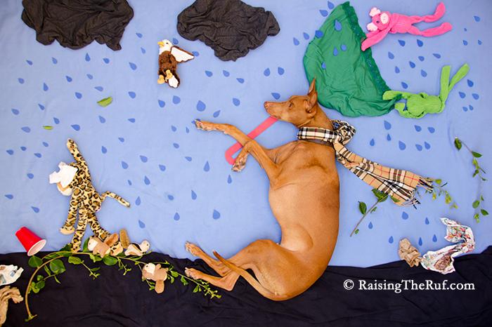 Rain Rain Go Away, funny dog has adventures while sleeping
