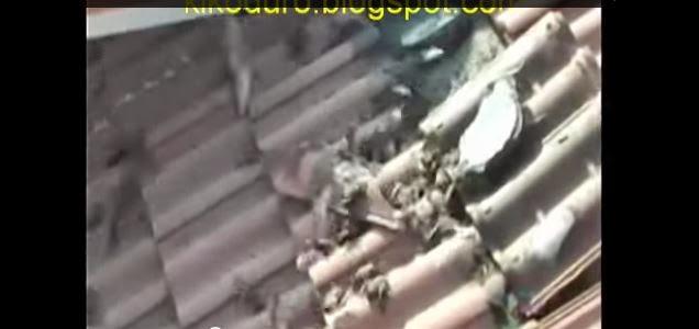 Descubrieron cientos de murcielagos en el techo