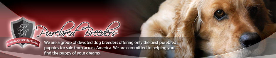 Purebred Breeders LLC - Purebred Breeders Reviews - Complaints Help