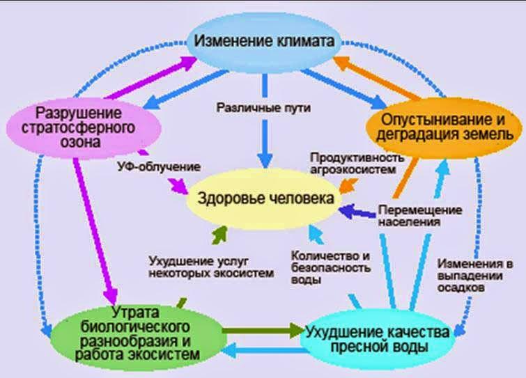 Система взаимосвязей здоровья человека и состояния окружающей среды