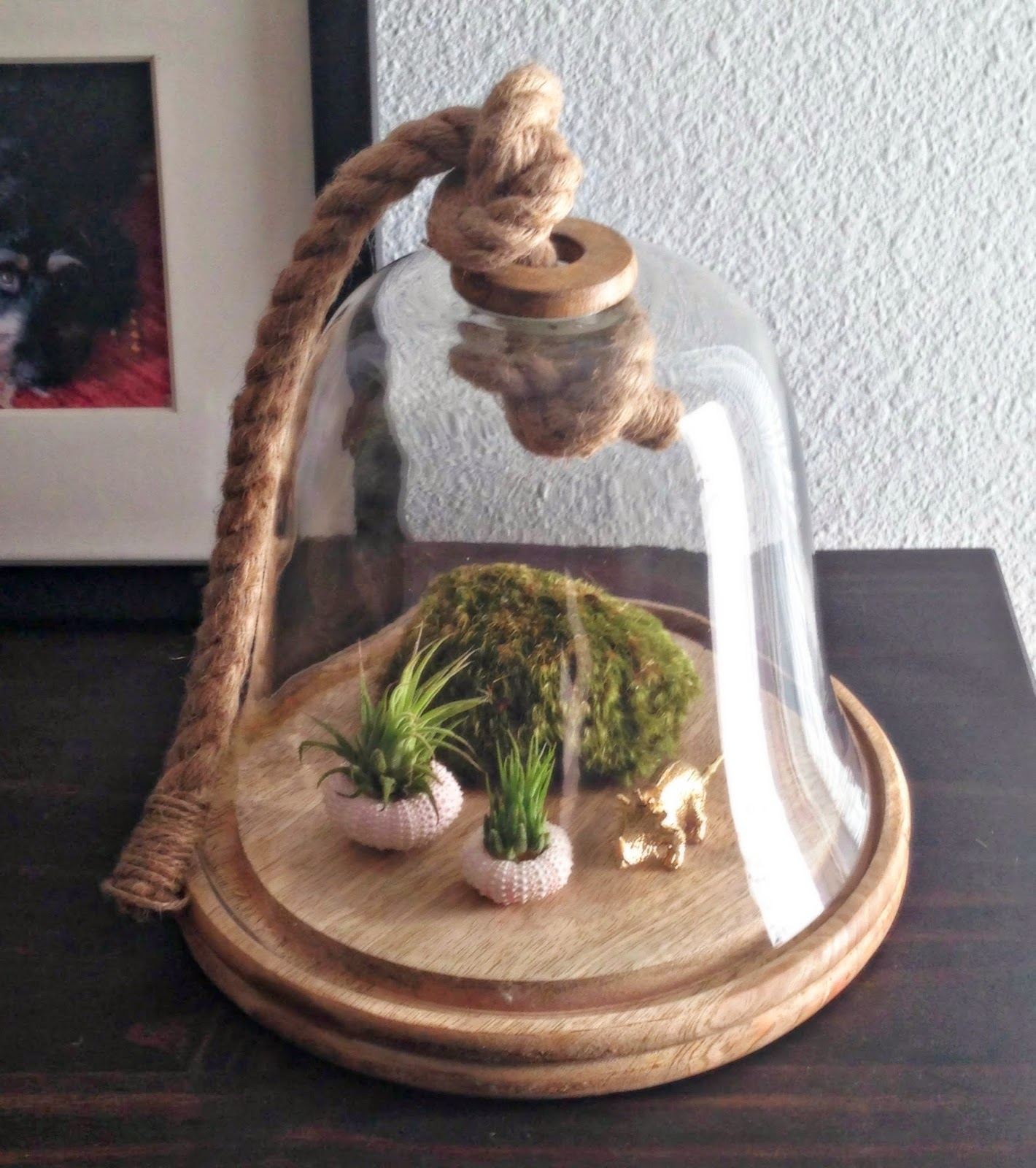 Air Plants, Sea Urchins & Bell Jar // The Twisted Horn