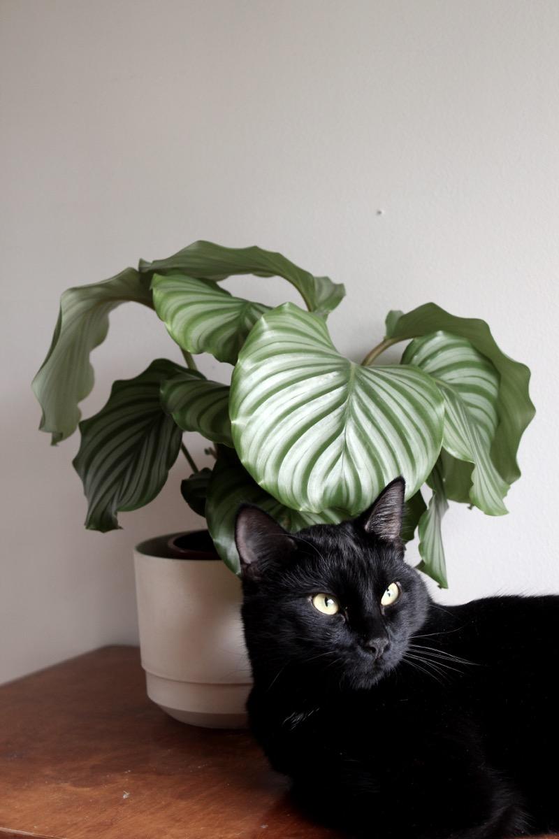 kukka ja musta kissa