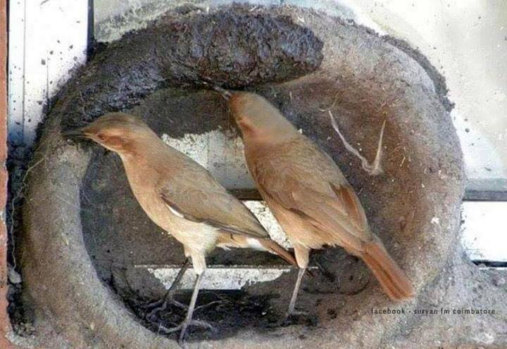 Birds are the natural architects