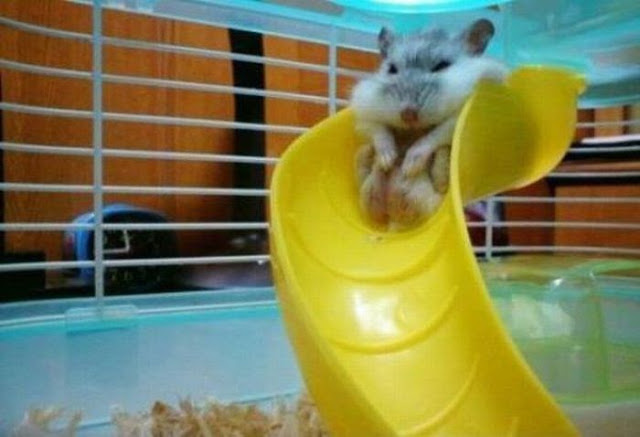 Funny animals of the week - 15 February 2013, funny animal pictures, funny animals photos, funny animals
