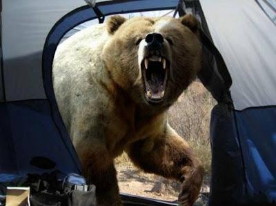 dimakan-beruang
