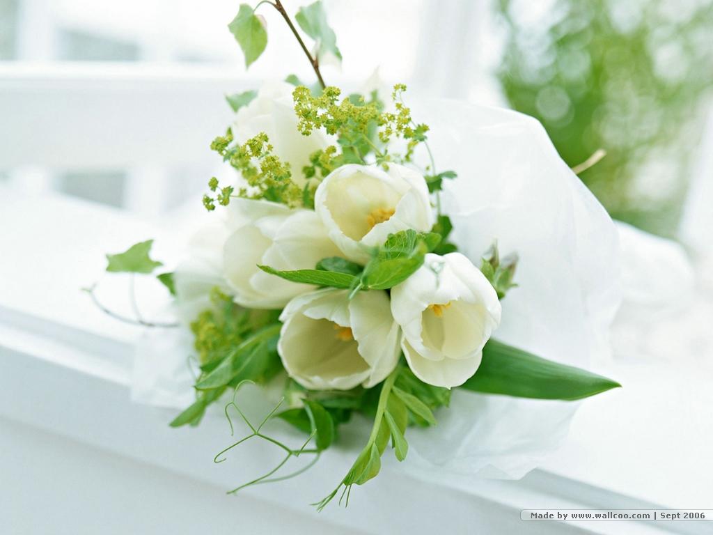 Xem thêm: Hình ảnh đẹp về hoa hồng xanh