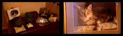 Vidéo : Mon chat est mort ce soir