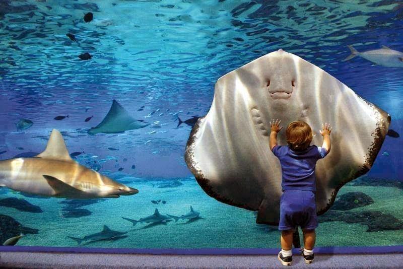 Giant Ray