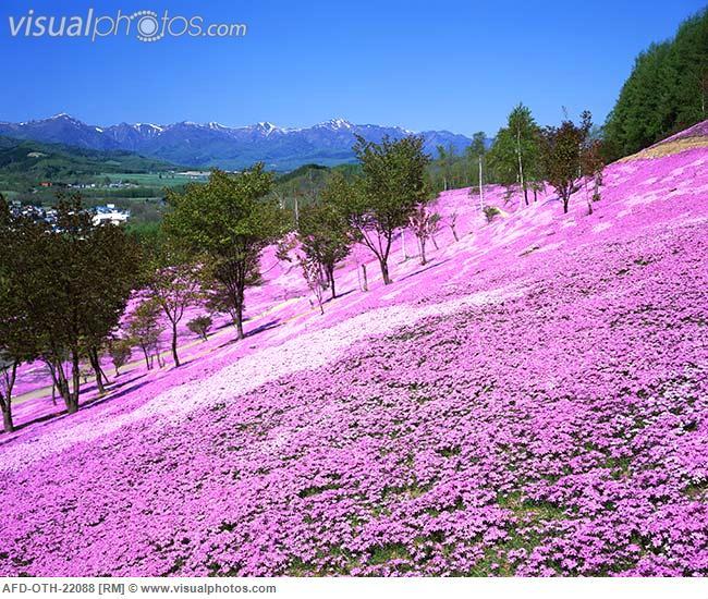 Ch Rlene S L Fe My Wish Hokkaido Japan