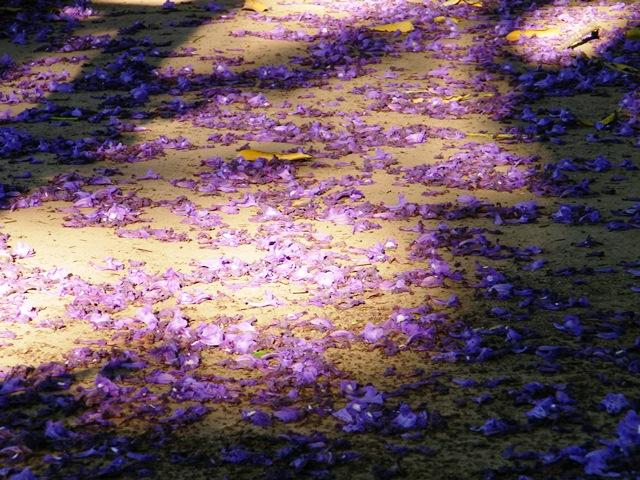 La foto del d a la alfombra morada - Alfombra morada ...