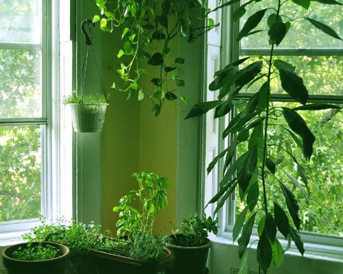 Plantas e jardins plantas flores e jardinagem plantas for Plantas para decoracion de interiores