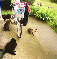 controllo bici