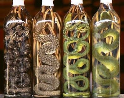 Las extrañas bebidas de Vietnam: El Snake Wine o Vino de serpiente. Snake Wine Snake Wine Snake Wine