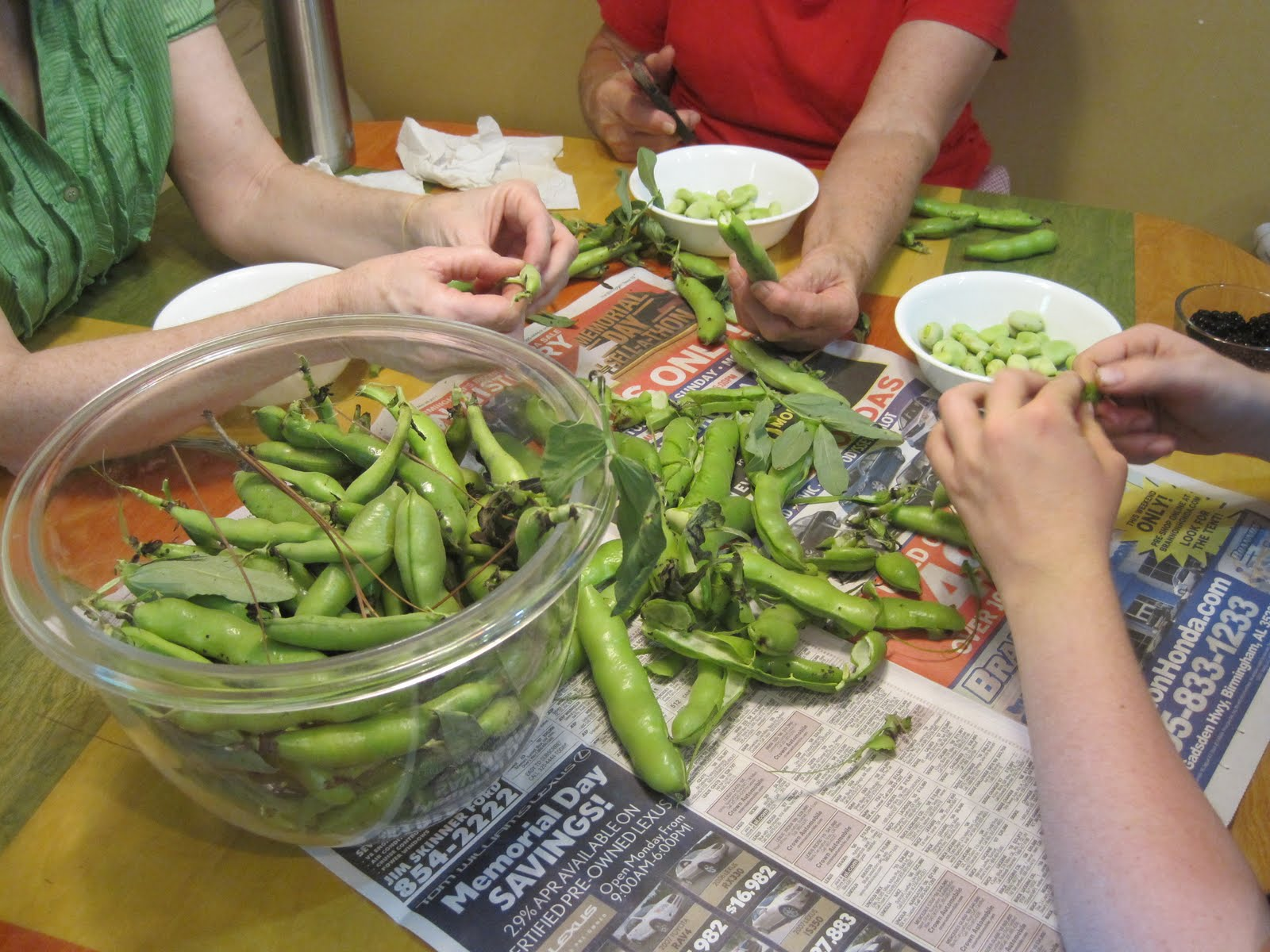 how to grow shell beans