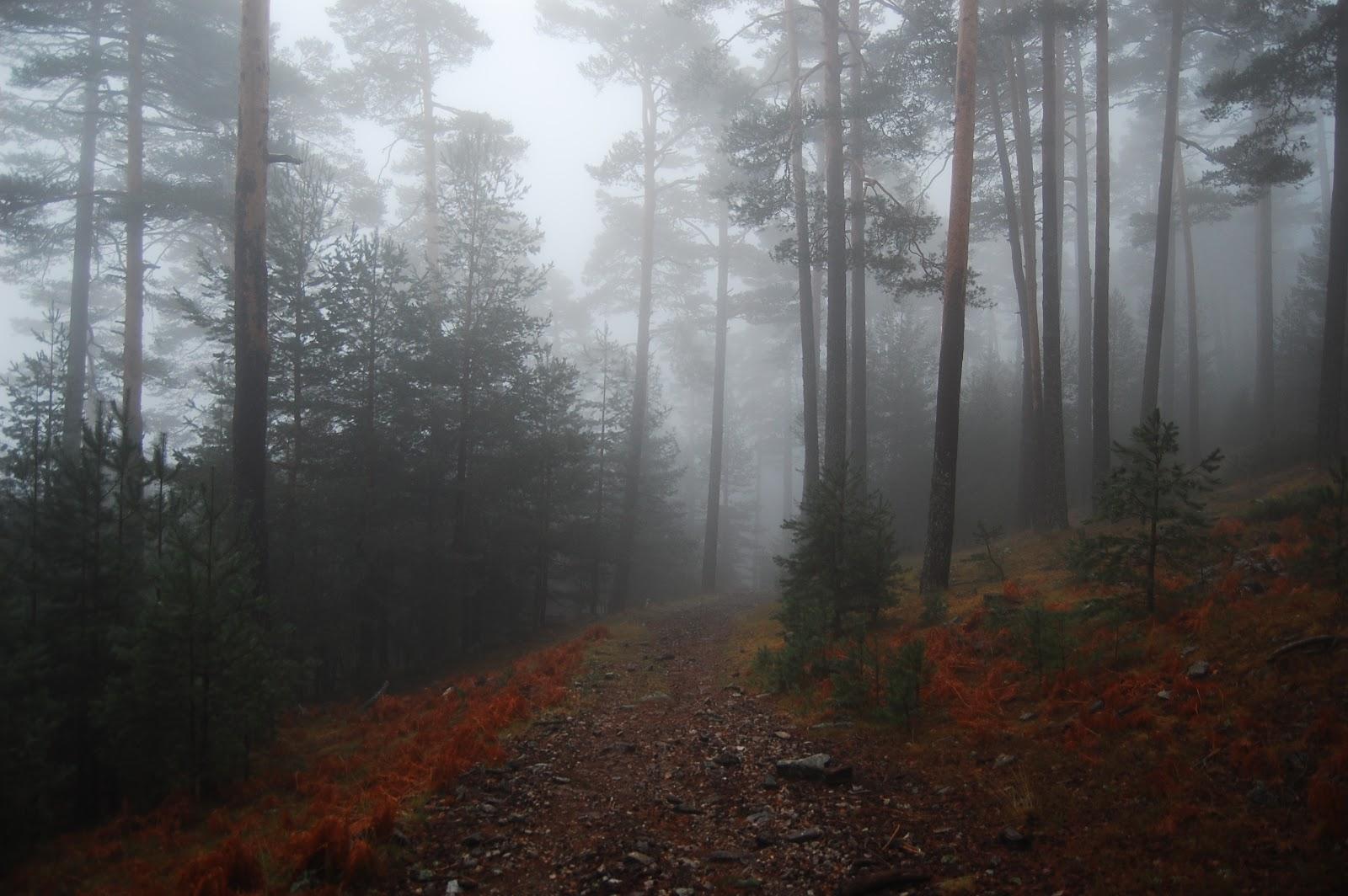 Blog Go Tandem - Camino Schmidt - Carril del Gallo con niebla