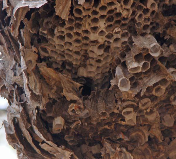 Junk In My Basement  Object  11  Hornets U2019 Nest