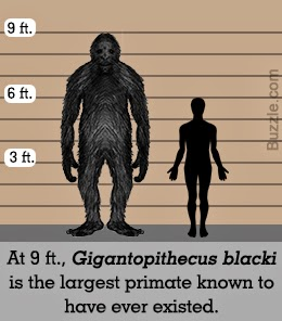Facts about gigantopithecus blacki article