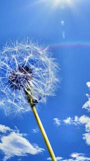 Dandelion & Blue Skies iPhone 5 free backgrounds