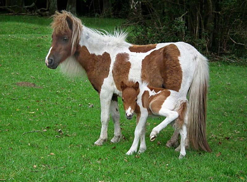 17. A mother horse with her matching foal. - 30 Animals With Their Adorable Mini-Me Counterparts