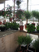 Väla Plantor