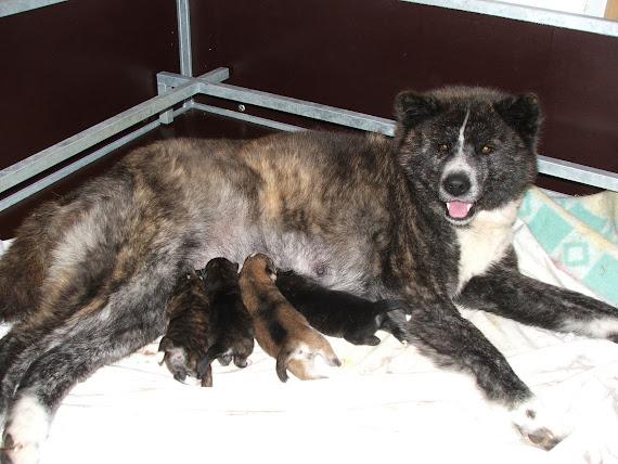 Apache et ses bébés de 2 jours