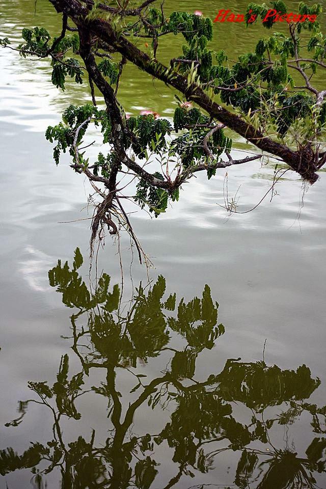 Lake Garden Taiping Perak