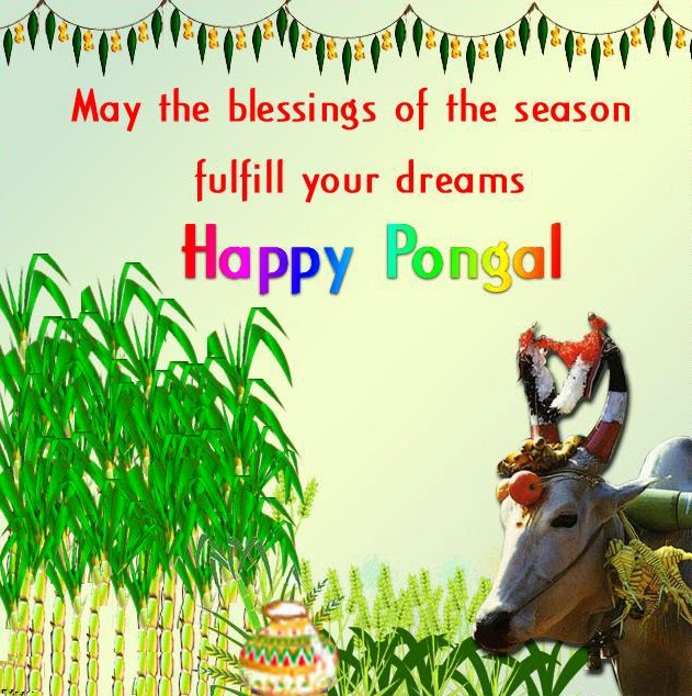 Pongal 2014 hd greetings word collection in english pongal pongal 2014 hd greetings word collection in english m4hsunfo
