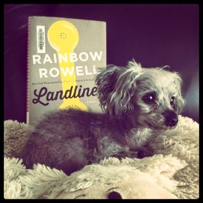 A tiny grey poodle--Murchie--lays on a pillow shaped like a flattened cream-coloured sheep. He faces towards the right side of the frame. Behind him sits a hardcover copy of Landline. The cover depicts an old fashioned yellow phone's handset against a grey background, with pink stripes just barely visible on the spine.