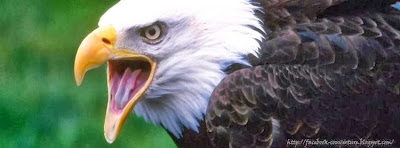 Couverture facebook sauvage aigle