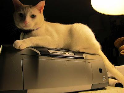 Epson Printer top cat