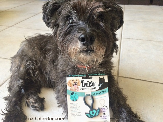 Oz the Terrier thinks Twigo Tags are a great IDea when pet parents travel
