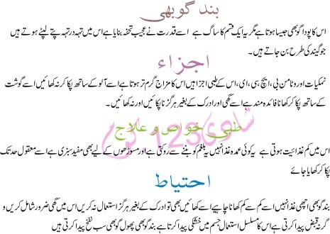 Essay Health Is Wealth In Urdu On Wikipedia