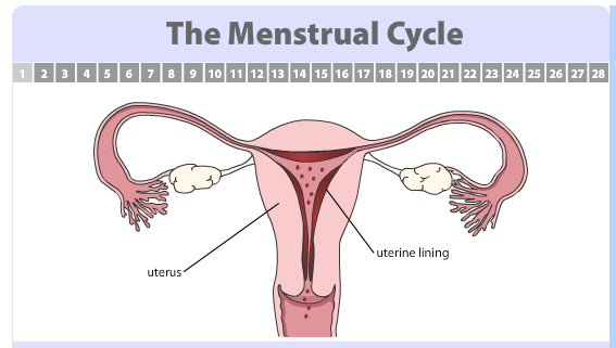 Nolvadex on cycle to prevent gynecologist