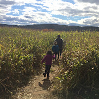 Corn Maze Riverview Farms Glastonbury CT New England Fall Events