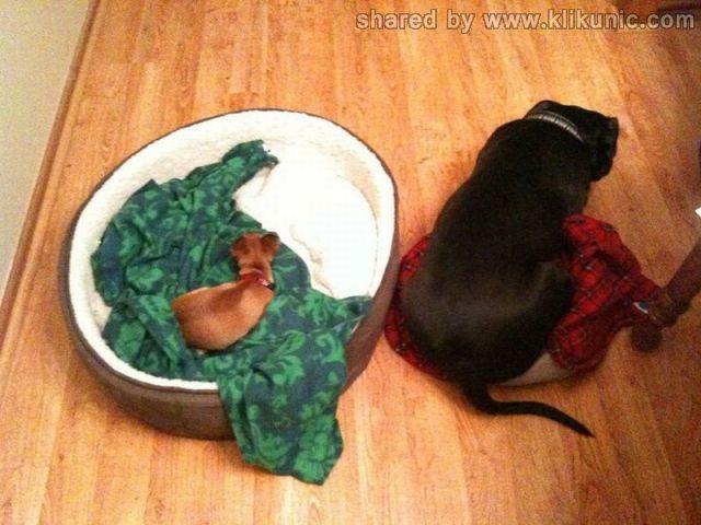 http://1.bp.blogspot.com/-h3hLltqb9xg/TXzE70FHVAI/AAAAAAAARE4/7WHR3RKSaiw/s1600/these_funny_animals_635_640_25.jpg