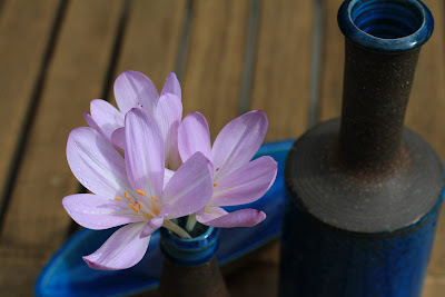 Kähler Blue Glaze and Colchicum (Autumn Crocus)