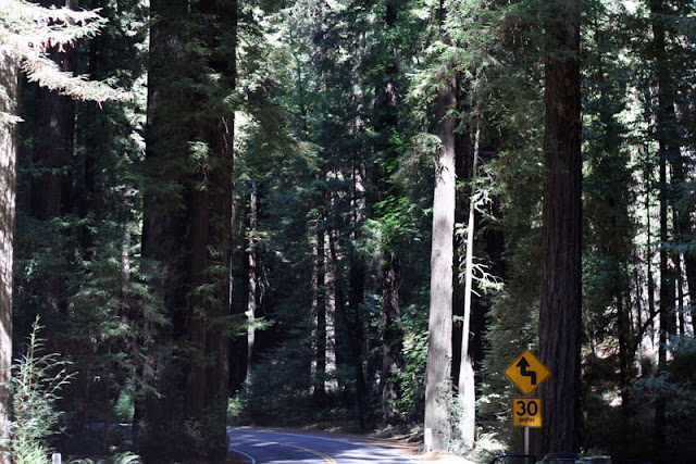 avenue of giants humboldt redwoods state park