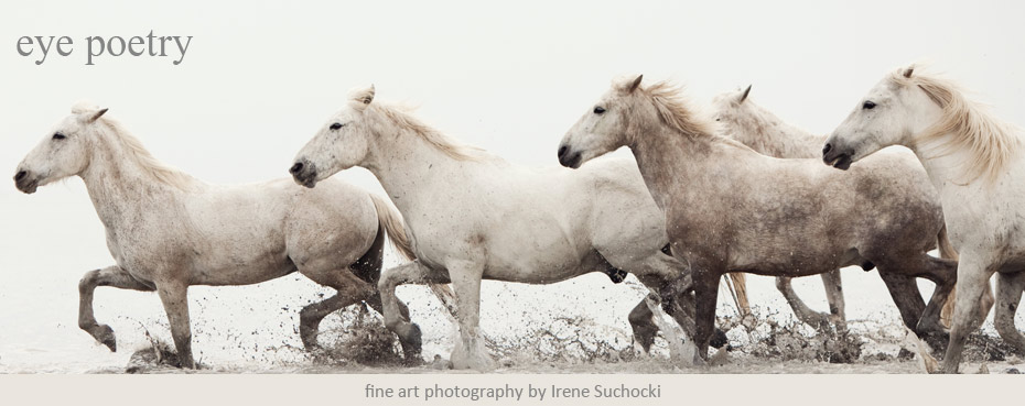 Fine Art Photography Blog of Irene Suchocki