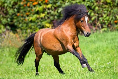 Companion Horses for Sale  Equine Now