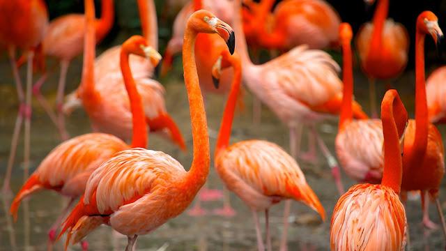 Du lịch Singapore khám phá vườn chim Jurong