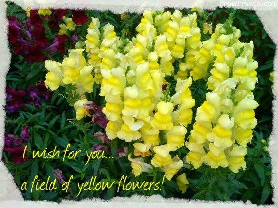 A Field Of Yellow Flowers Is My Wish For You