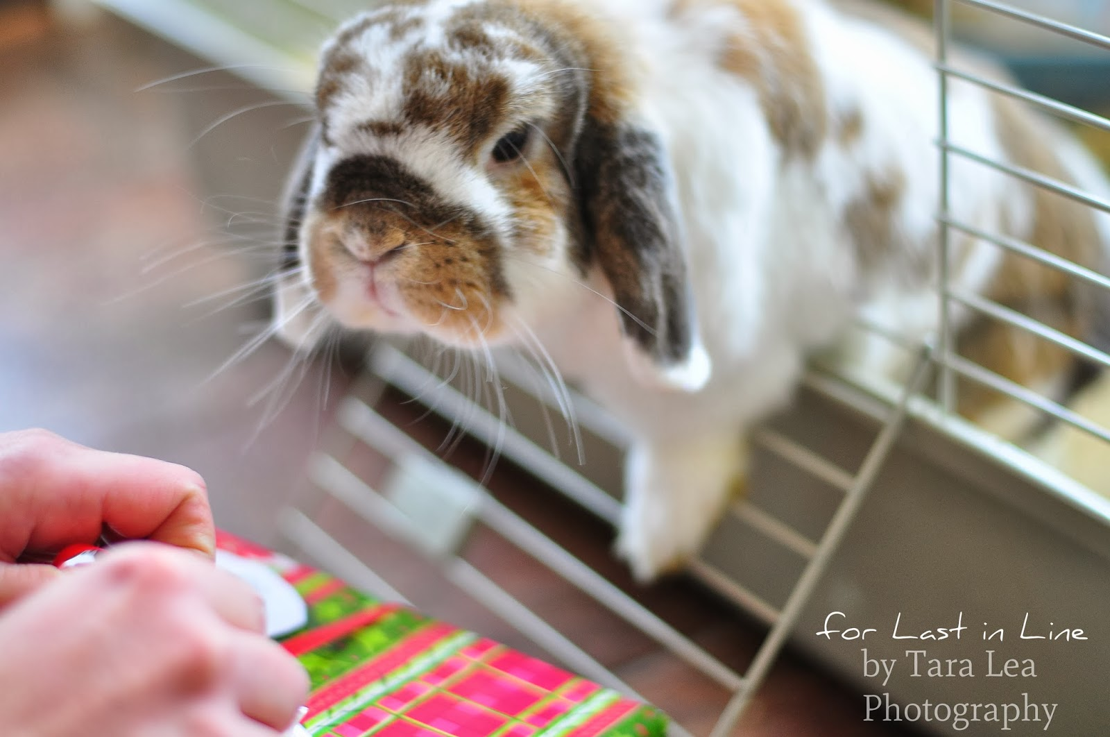 Arlo the Adorable Bunny: Forever Last in Line