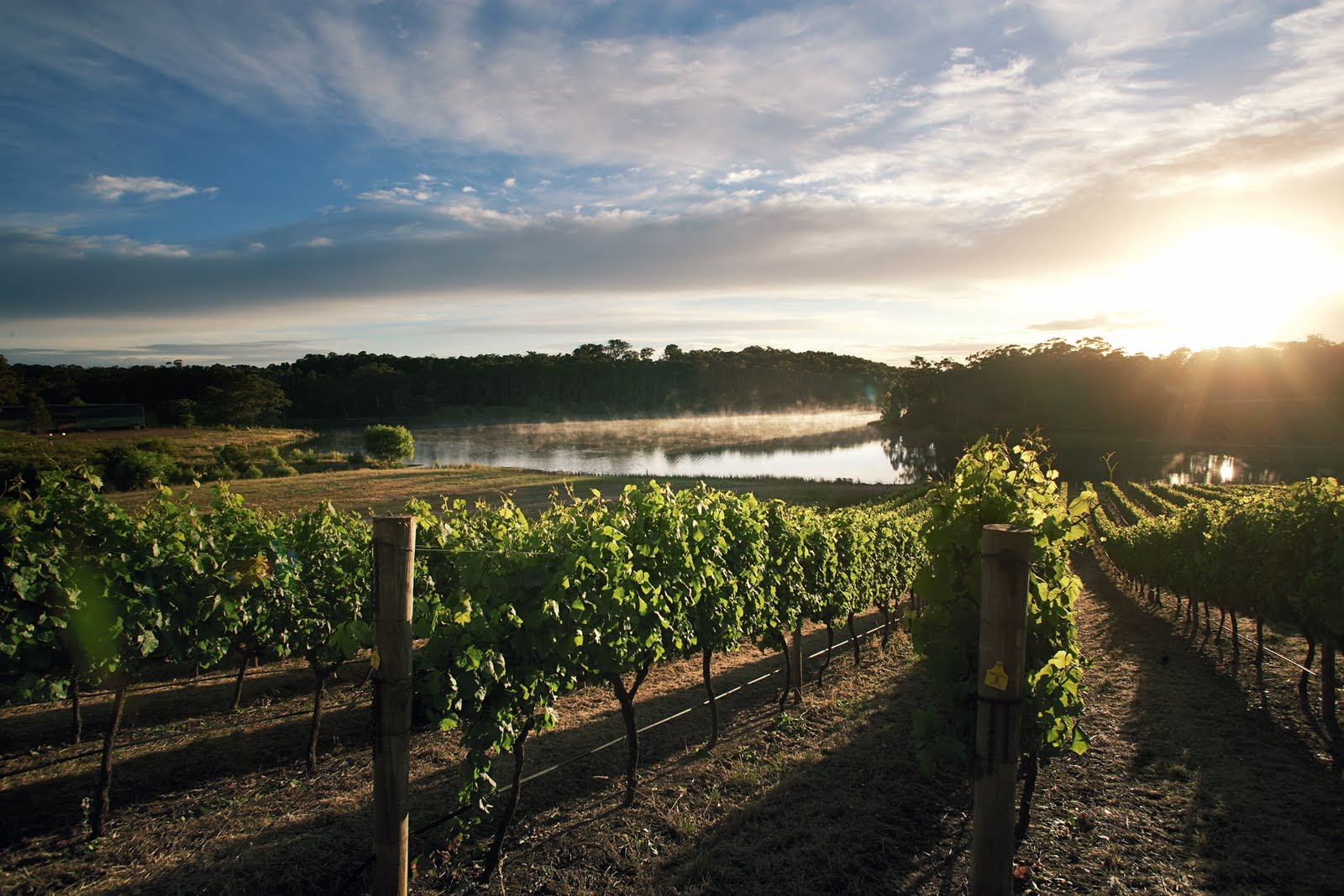 Margaret River Wine Regio Australia  city photos gallery : InWineTruth: AUSTRALIA: Adversity Drives Innovation to the Edge