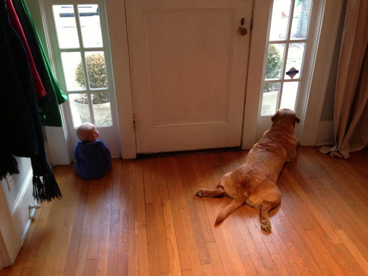 Cute dogs - part 8 (50 pics), dog and baby looking through the window