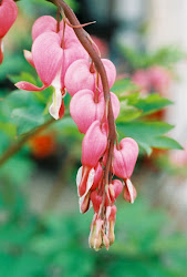 """Bleeding Heart"" by Jean Smith"