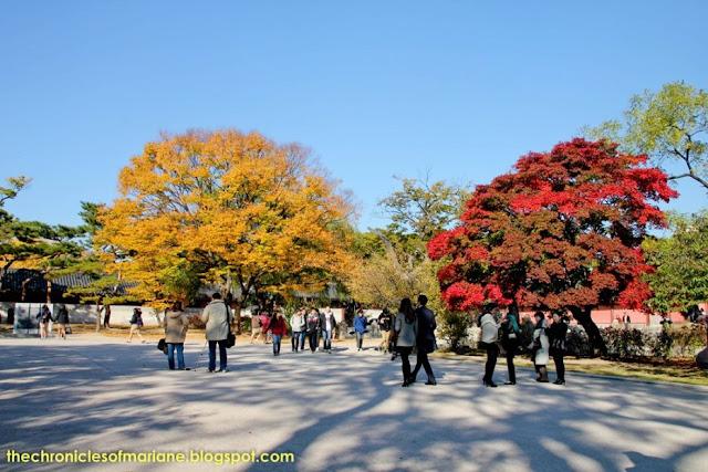 autumn seoul