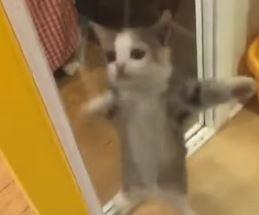 Gato eufórico com a chegada do dono é o vídeo mais fofo do dia.