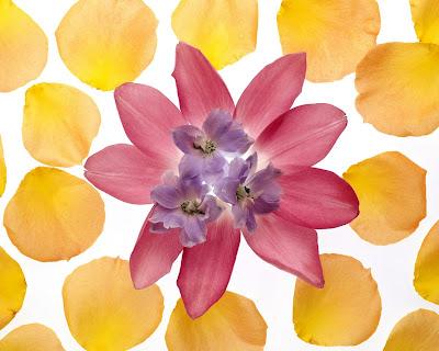 Flowers Wallpapers HD